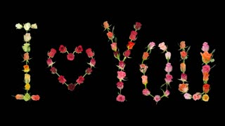 "Montage of opening roses time-lapse in ""I love You"" shape with pulsating 'Valentine' heart 1x1 in Animation codec format with ALPHA transparency channel isolated on black background"