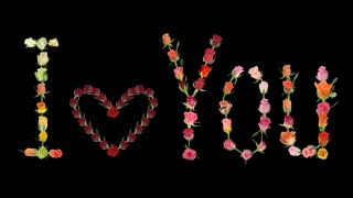 """Montage of opening roses time-lapse in """"I love You"""" shape with pulsating 'Valentine' heart 2x2 in PNG+ format with alpha transparency channel isolated on black background"""
