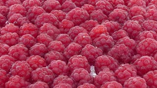Time-lapse of drying red raspberry 1b1 in dehydrating machine