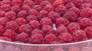 Time-lapse of drying red raspberry in dehydration machine 1c1