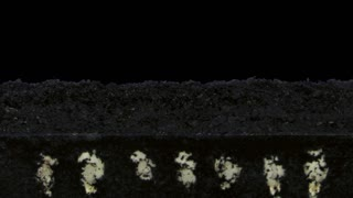 Time-lapse of germinating pumpkin seeds 4x1 in PNG+ format with ALPHA transparency channel isolated on black background