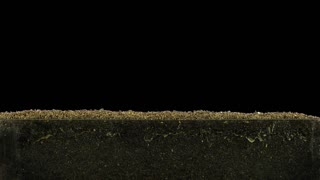 Time-lapse of growing decorative Easter grass 1b3 in RGB + ALPHA matte format isolated on black background