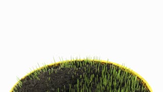 Time-lapse of growing decorative Easter grass in a pot 3a1 on white background