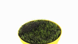 Time-lapse of growing decorative Easter grass in a pot 3x1 on white background, front view