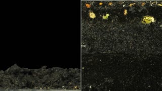 Time lapse of growing germinating mixed vegetables (radish, barley, alfalfa, cucumber, bean, mung) above and below the earth surface 6e1 in PNG+ format with ALPHA transparency channel isolated on black background