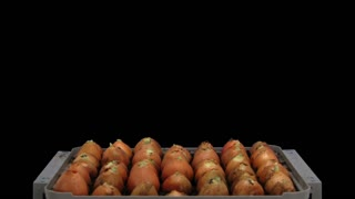 Time-lapse of growing onion sprouts 12a3 in RGB + ALPHA matte format isolated on black background