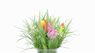 Time-lapse of growing, opening and rotating multicolor tulips bouquet in a vase 1a2 in DCI 4K format on white background
