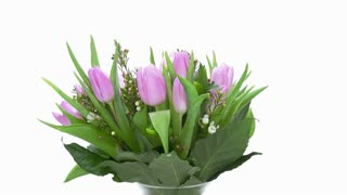 Time-lapse of growing, opening and rotating multicolor tulips bouquet in a vase 3a2 in 4K format on white background