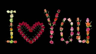 Montage of opening roses time-lapse in 'I love You' shape 2x3 in RGB + ALPHA matte format isolated on black background