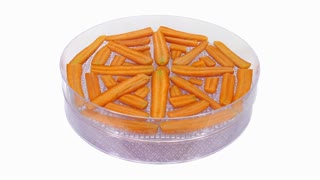 Time-lapse of drying (dehydrating) orange carrot vegetable 3x1 in dehydrating machine