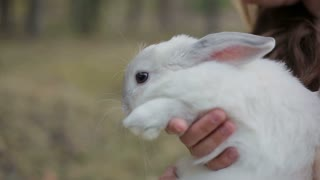 Girl and white rabbit
