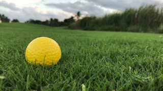 Golf ball on the grass close up