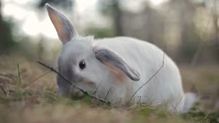 White rabbit in a summer forest