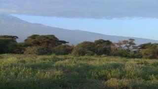 A beautiful panning morning shot of Mt. Kilimanjaro in Tanzania, East Africa.