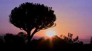 A beautiful sunset shot with a cactus tree in East Africa.
