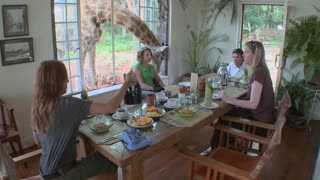 A giraffe interrupts a breakfast at a house in Africa.