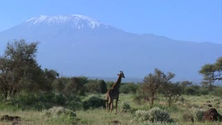 A giraffe stands in front of Mt. Kilimanjaro in the distance.