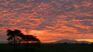 A gorgeous orange sunset over the plains of Africa with acacia trees in foreground.