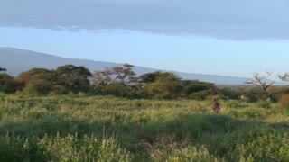 A Masai warrior walks in front of Mt. Kilimanjaro in Tanzania, East Africa at dawn.