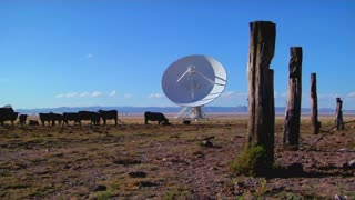 A satellite dish sits in a field with cattle and old fence posts.