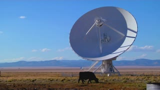 A satellite dish sits in a field with cattle.