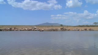 A wide shot of a watering hole in Africa with cattle in distance.