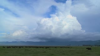 A wide shot of spectacular cloud formations on the plains of Africa, with cape buffalo grazing below.