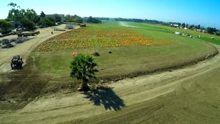 An aerial over a pumpkin patch.