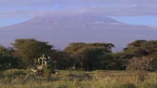 Beautiful time lapse shot of Mt. Kilimanjaro in Tanzania, East Africa at dawn.
