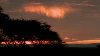 Birds fly against a red orange sky at dawn on the plains of Africa.