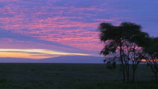 Birds migrate across a multicolored sky on the plains of Africa.