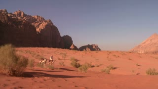 Camel train with Bedouin driver moves across the vast desert landscapes of Wadi Rum in the Saudi deserts of Jordan.