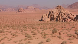 Camels move across the vast desert landscapes of Wadi Rum in the Saudi deserts of Jordan.