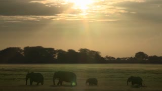 Clouds and the sun move in time lapse over a herd of elephants on the African savannah.