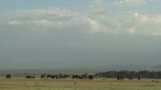 Clouds move in time lapse over a herd of elephants on the African savannah.