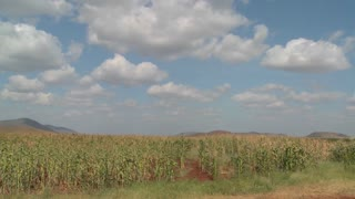 Corn grows in farm fields in Africa in this time lapse shot.