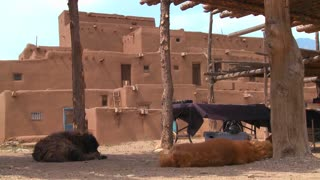 Dogs sleep outside the Taos pueblo in New Mexico.
