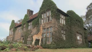 Giraffes mill around outside an old mansion in Kenya.