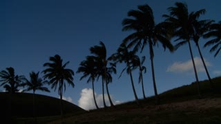 Palm trees blow in the wind on a remote tropical beach.