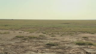 Pan across parched desert to the skeleton of a dead animal lies in the desert as an example of life and death in East Africa.