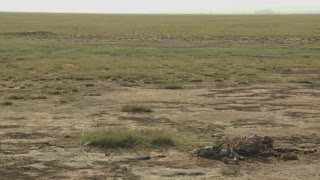 The skeleton of a dead animal lies in the desert as an example of life and death in East Africa.