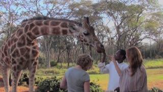 Tourists pet a giraffe in a zoo setting.