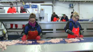Women work on an assembly line at a fish processing factory.