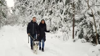 A happy married couple being in the winter pine forest walks with beautiful black-pain Siberian Husky. They are soothing and joyful on people's faces