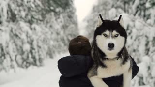 A man walks through the forest and carries a dog in his arms. Siberian husky in the forest man helps to bring the dog home. Winter forest