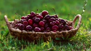 Close-up wash under running water red cherry berries in baskets standing on green grass