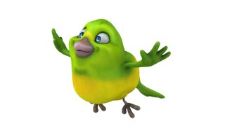 Green bird - 3D Animation