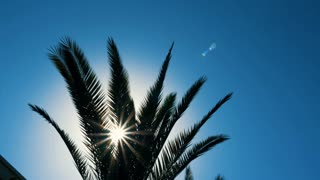 Sunlight flashes through green branches and leaves palm tree waving on wind