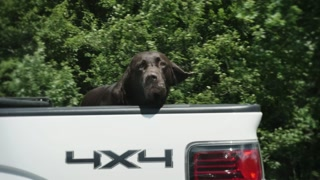 4K Dog in the Back of a Truck