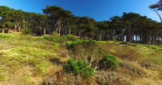 A daytime establishing shot of the tree-lined Land's End Coastal Trail in San Francisco.